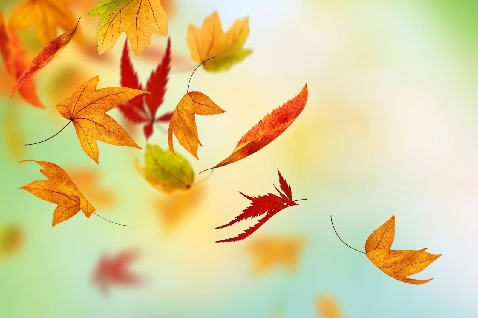 October - HD1600×1066